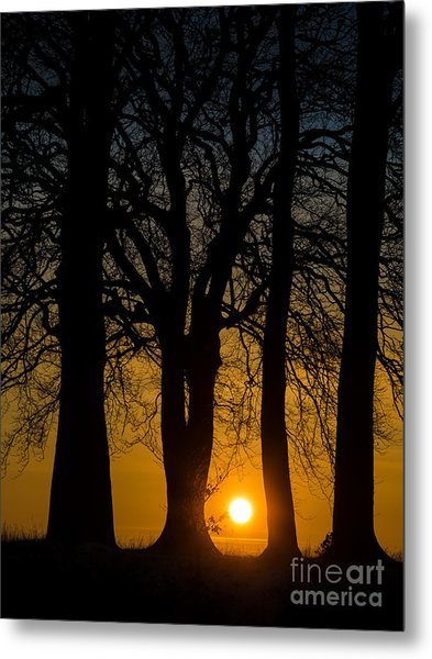 Setting Between The Trees - Wittenham Clumps Metal Print by OUAP Photography