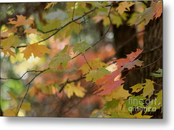 Shaded Wood Metal Print