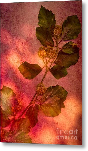 Shades Of Autumn Metal Print