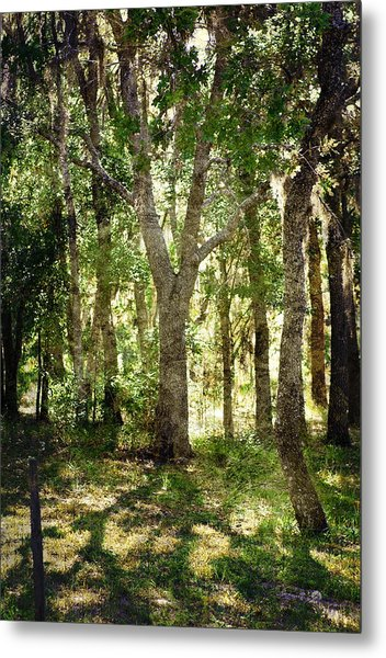 Shadow Forest Metal Print