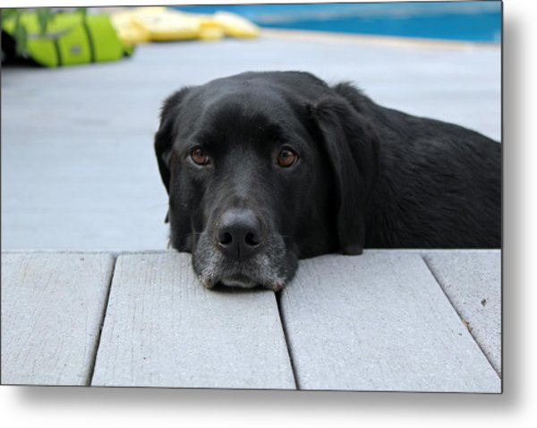 Shadow Lounging On The Deck Metal Print
