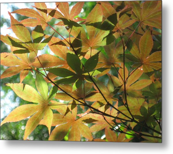 Shadows Of Maple  Metal Print
