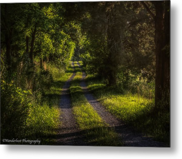 Shady Country Lane Metal Print by Paul Herrmann