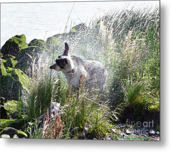 Shaking It Off Metal Print