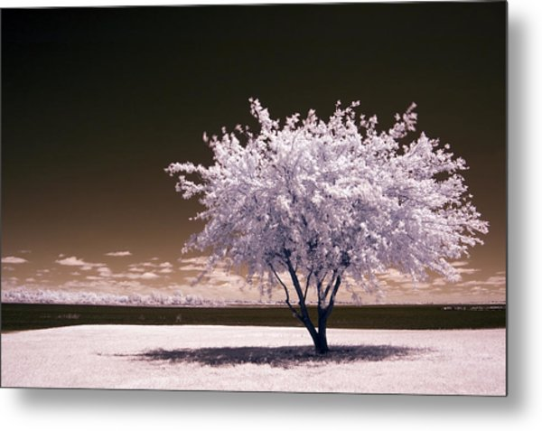 Shaking The Tree Metal Print
