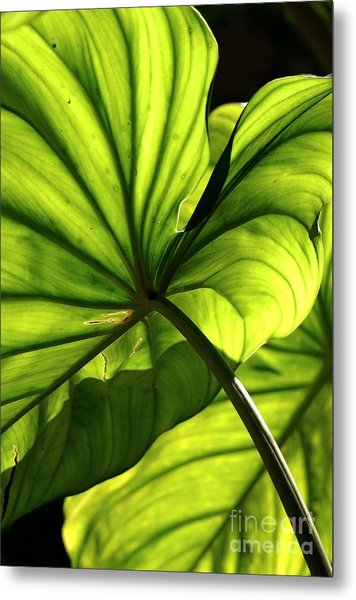 Shapes Of Hawaii 12 Metal Print