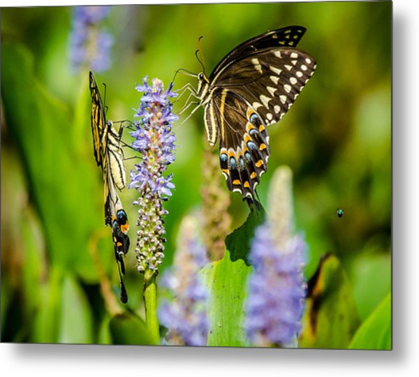 Sharing A Drink Metal Print