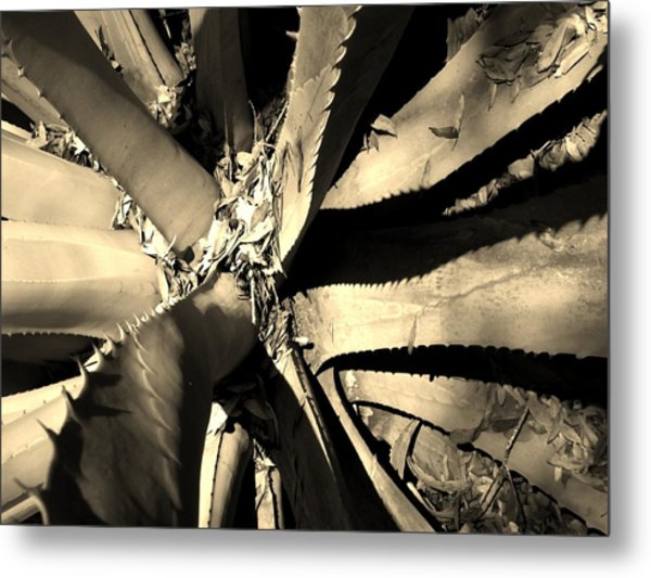 Sharp Edged Self Protection Metal Print by Lori-Anne Fay