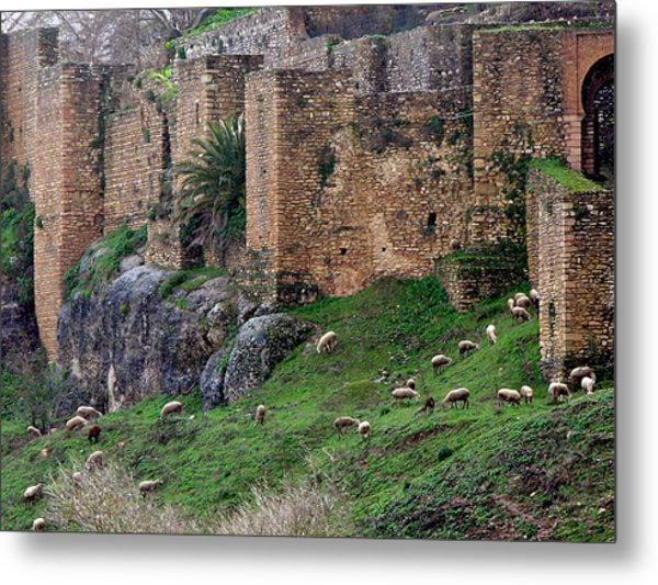 Sheep Cliff Metal Print