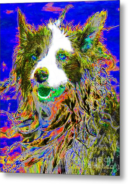Sheep Dog 20130125v3 Metal Print by Wingsdomain Art and Photography