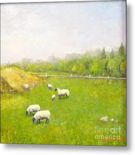 Sheep In Pasture Metal Print