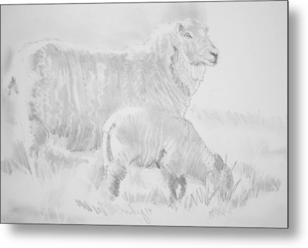 Sheep Lamb Pencil Drawing Metal Print