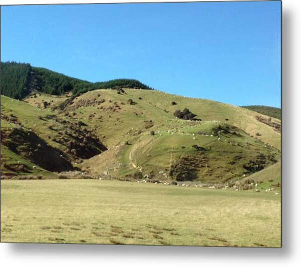 Sheep On Hill Metal Print by Ron Torborg