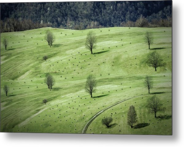 Sheeps ... Metal Print