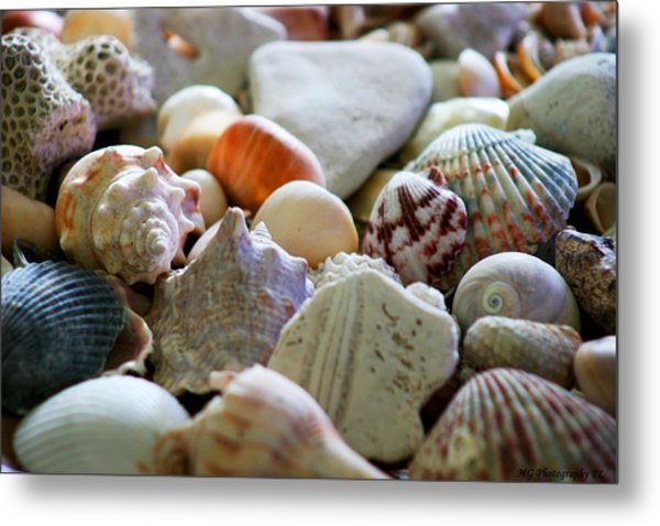 Shell Collection Metal Print