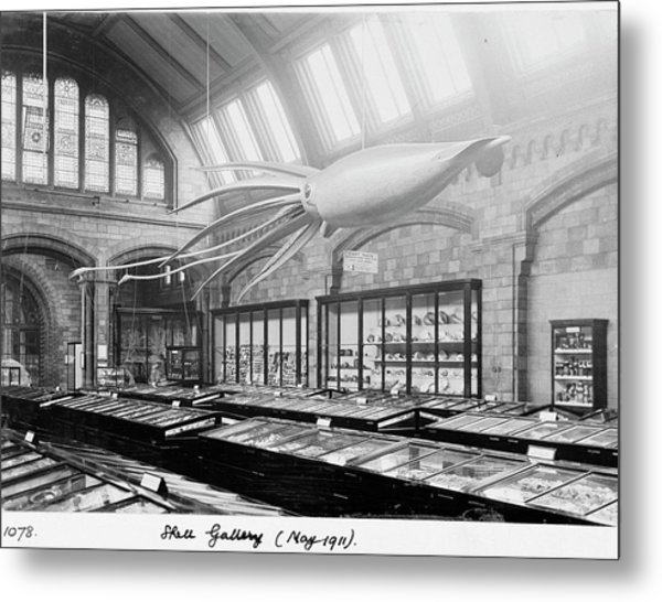 Shell Gallery Metal Print by Natural History Museum, London/science Photo Library