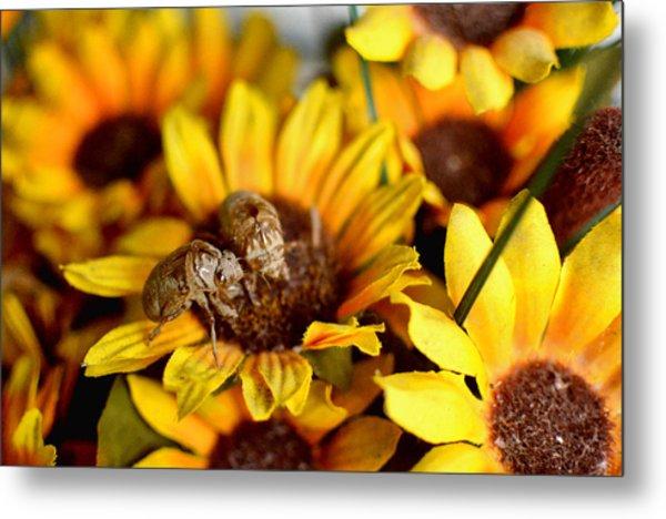 Shell Of A Bug On Flower Metal Print by Jeffrey Platt
