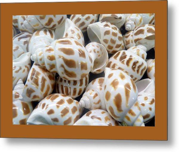 Shells - 7 Metal Print