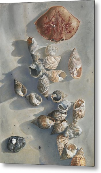 Shells On A Sandy Beach Metal Print