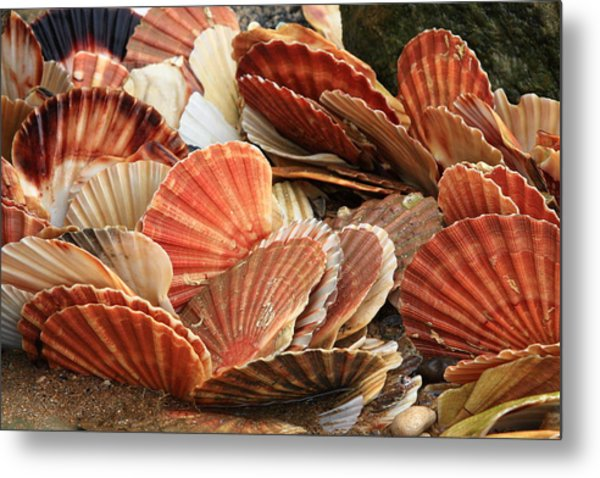 Shells On The Shore Metal Print