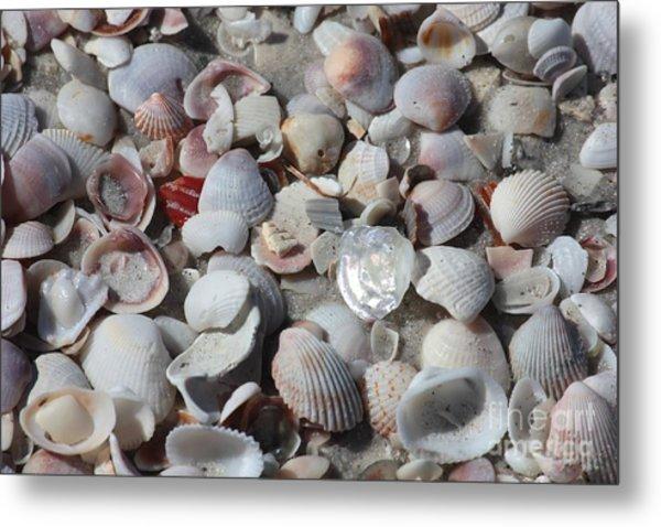 Shells On Treasure Island Metal Print
