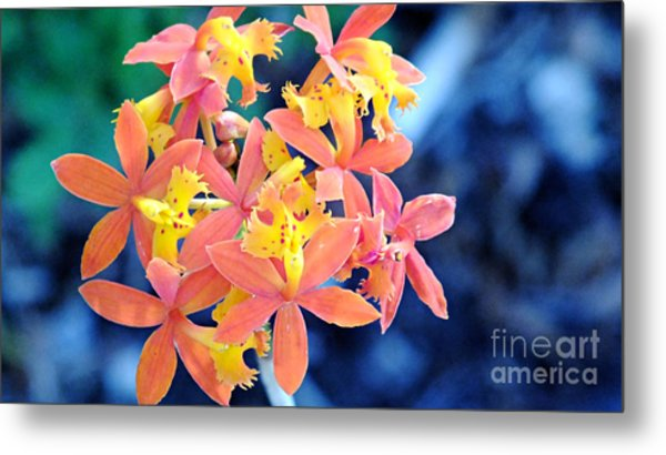Sherbert Of The Sun Metal Print