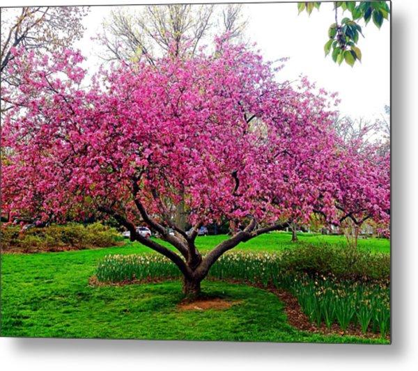 Sherwood Gardens Tree Metal Print