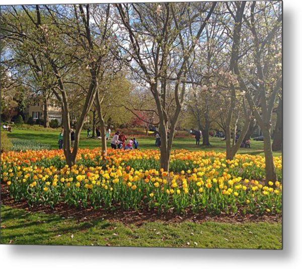 Sherwood Gardens Yellow Tulips Metal Print
