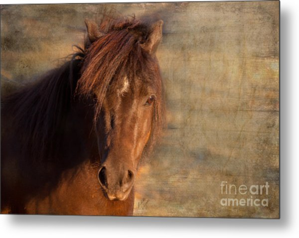 Shetland Pony At Sunset Metal Print