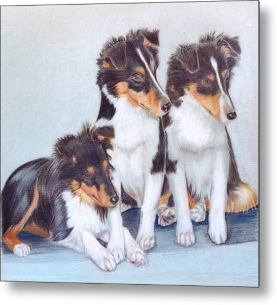 Shetland Sheepdog Puppies Metal Print