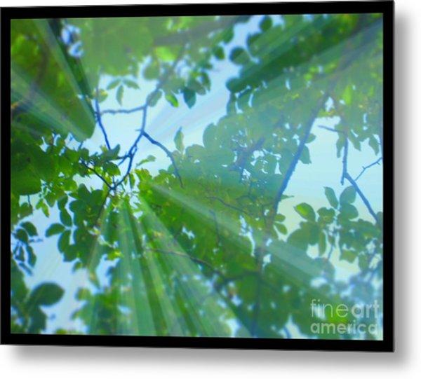 Shine Under Tree Metal Print by Sky Skier