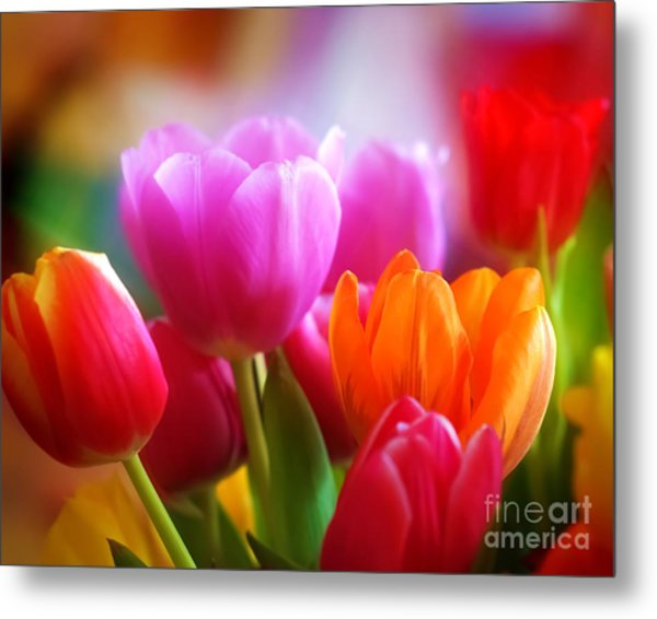 Shining Tulips Metal Print