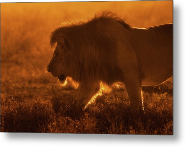 Shiny King Metal Print