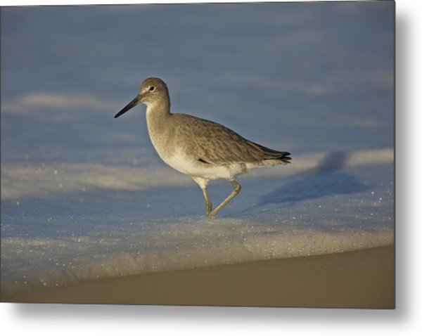 Shore Bird Mg_7903 Metal Print