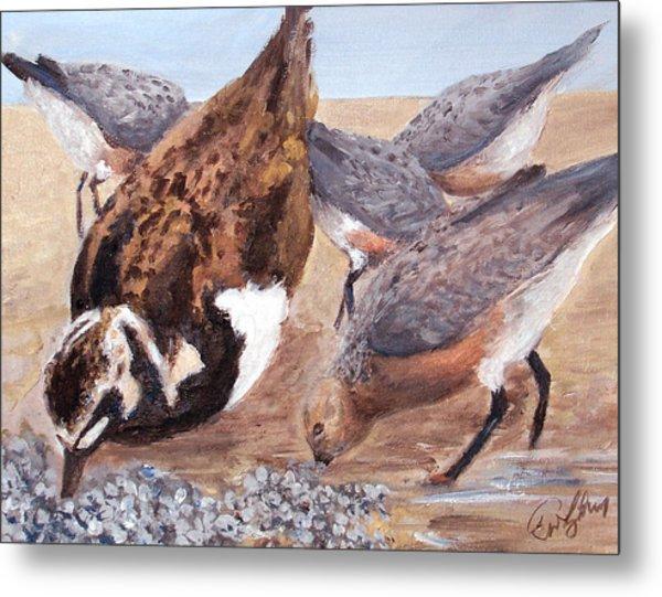 Shorebirds Metal Print