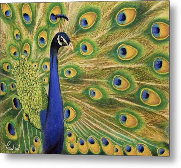 Showoff - Peacock Painting Metal Print by Prashant Shah