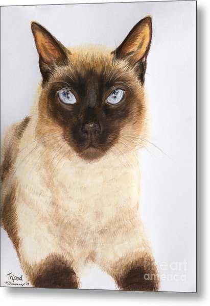 Siamese Cat Over White Metal Print