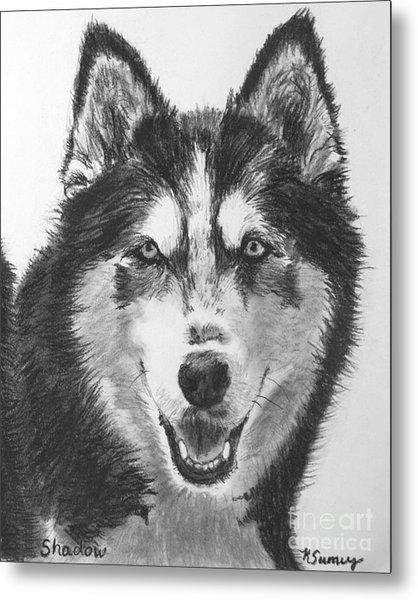 Siberian Husky Drawing Metal Print