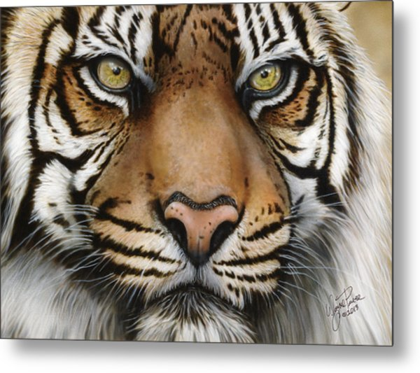 Siberian Tiger Closeup Metal Print
