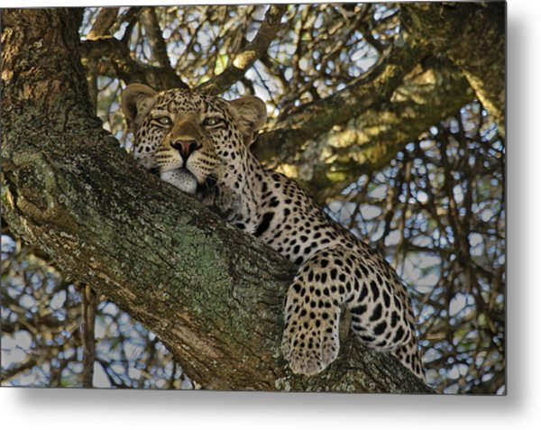 Siesta Time Metal Print
