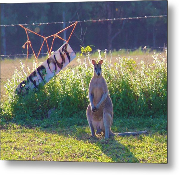 Metal Print featuring the photograph Signs  by Debbie Cundy