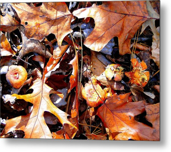Signs Of Autumn Metal Print