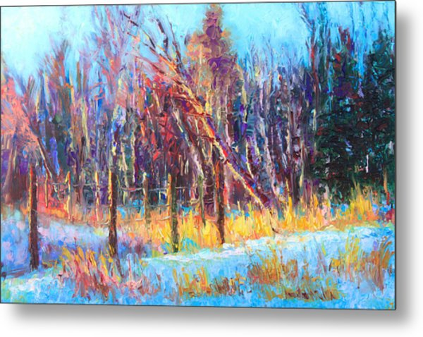 Signs Of Spring - Trees And Snow Kissed By Spring Light Metal Print