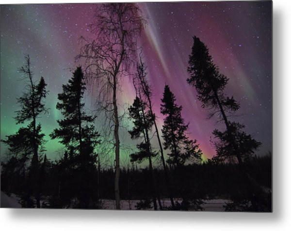 Silence Of The Night Metal Print