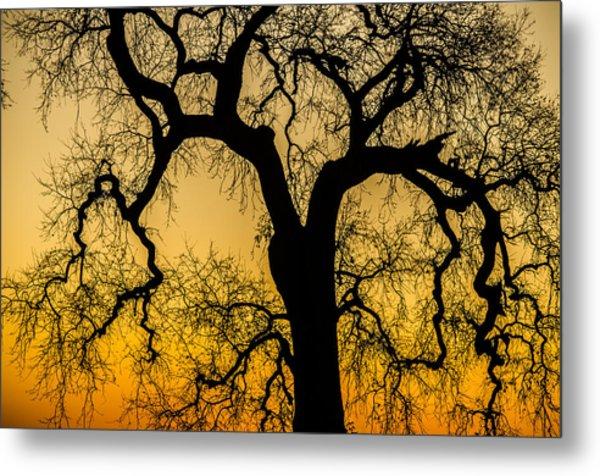 Silhouette Oak Metal Print