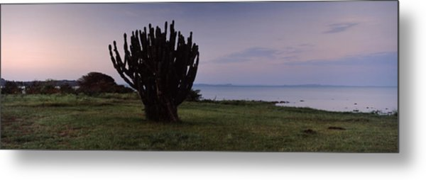 Silhouette Of A Cactus At The Lakeside Metal Print