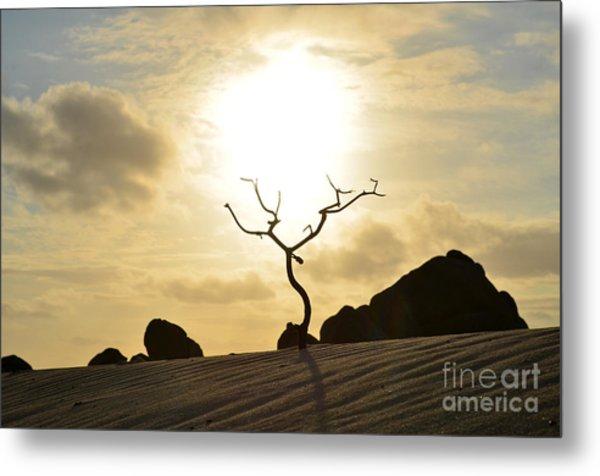Silhouetted Tree At Dawn In Aruba Metal Print