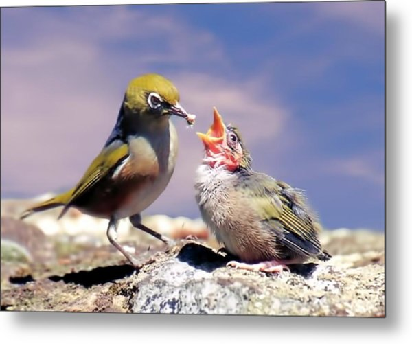 Silver Eye With Chick Metal Print
