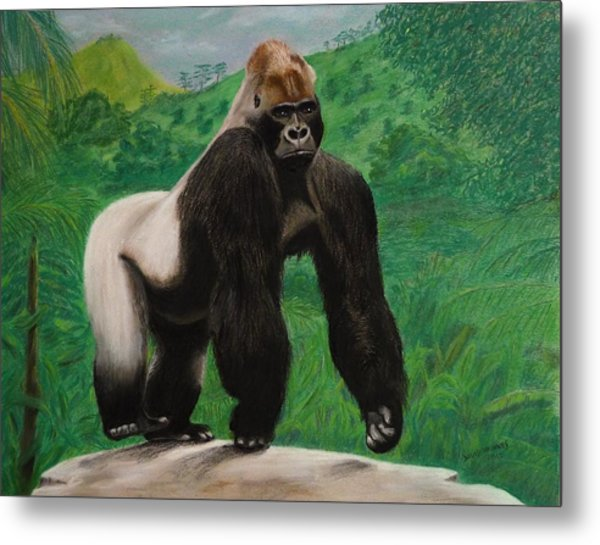 Silverback Gorilla Metal Print by David Hawkes