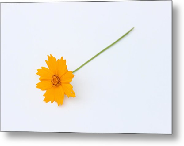Metal Print featuring the photograph Simplicity by Ben Shields